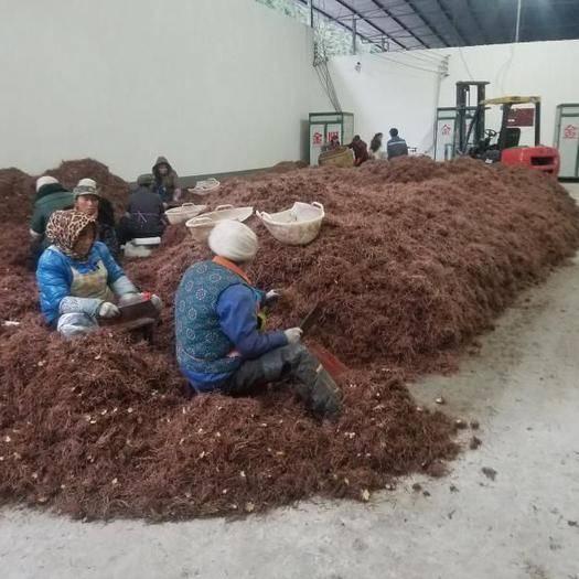 重慶石柱 六塘中藥材合作社2020年產新無硫優質紫菀100噸!