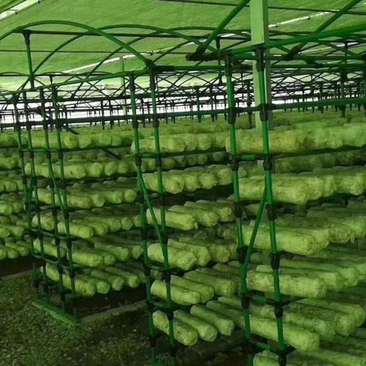 天津养殖大棚 包塑管   规格齐全      适合养植棚       种植