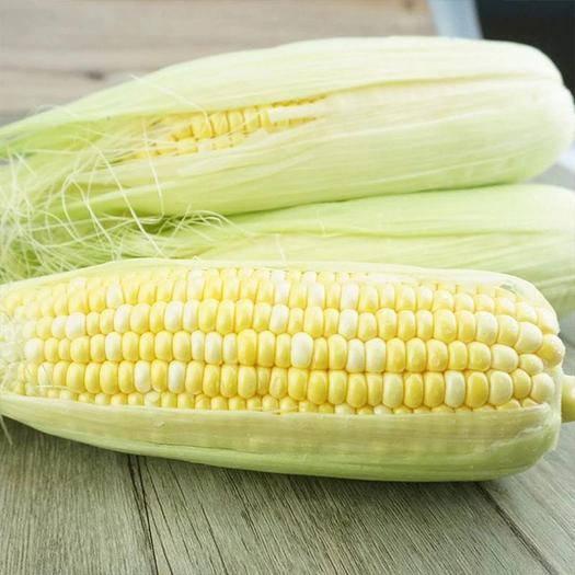 昆明水果玉米 云南新鲜  全年供货  现摘现发  专业一件代发5斤9斤装