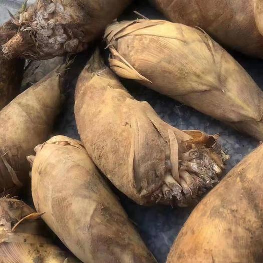 广西壮族自治区桂林市临桂区冬笋 新鲜无公害天然绿色食品