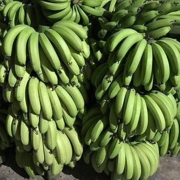 广西灵山本地香蕉广西蕉