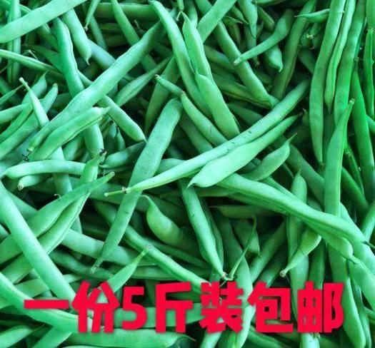 盐城射阳县 四季豆现摘现发豆角