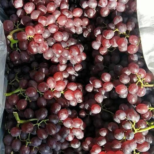 龙口市 烟台优质红宝石葡萄大量出库