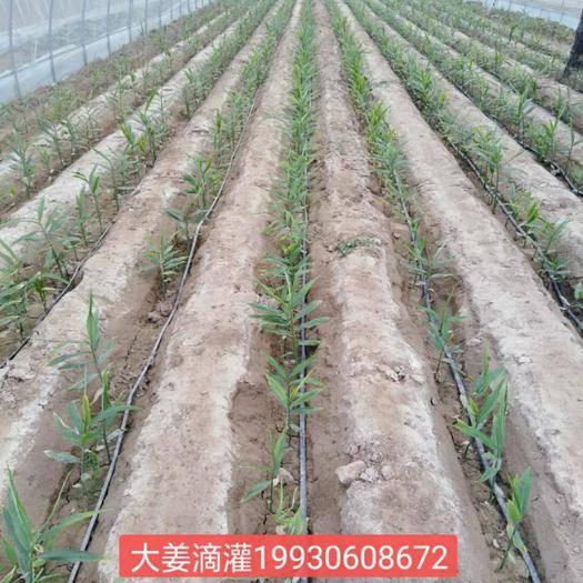 河北省石家庄市新华区迷宫式滴灌带 滴灌带