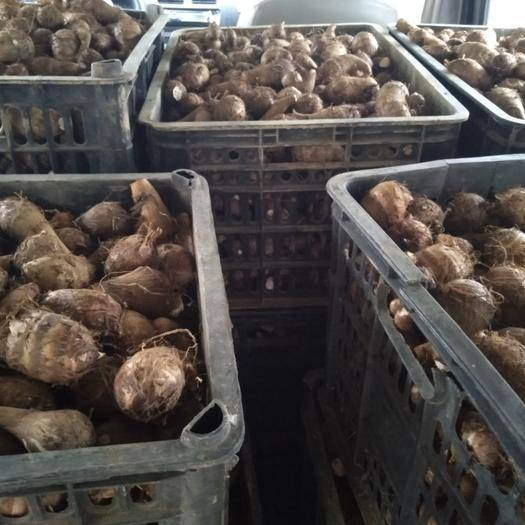 贵州省安顺市紫云苗族布依族自治县 本地小芋头,餐桌上的美味,炖猪蹄和黄豆。