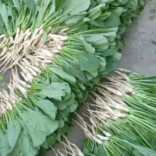 湖南省长沙市浏阳市 萝卜菜