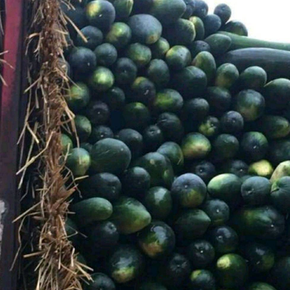 黑皮冬瓜,物美價廉