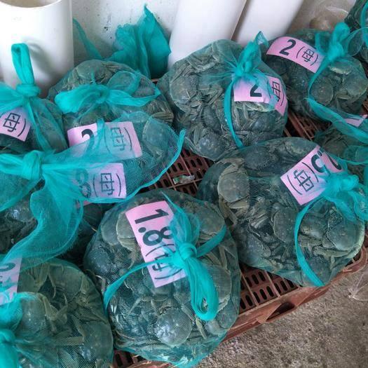 洪湖市 洪湖大闸蟹  清水螃蟹  母蟹  未及时更新下单前请确定。