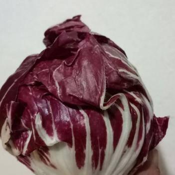 红菊苣 倒地   底价处理4000棵红球