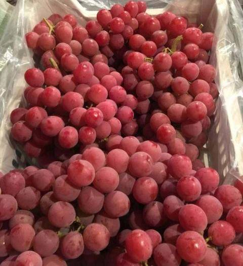 涿鹿县美国红提 精选优质红提,5%以下,一次果,基地直供