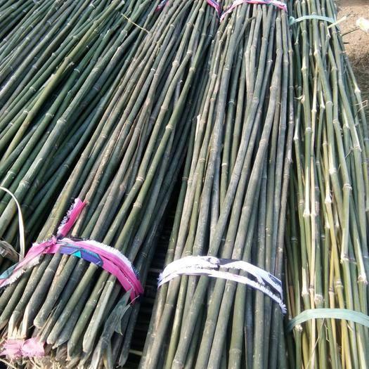 宣城广德县莱架竹 菜架竹,大棚竹,各种杂竹