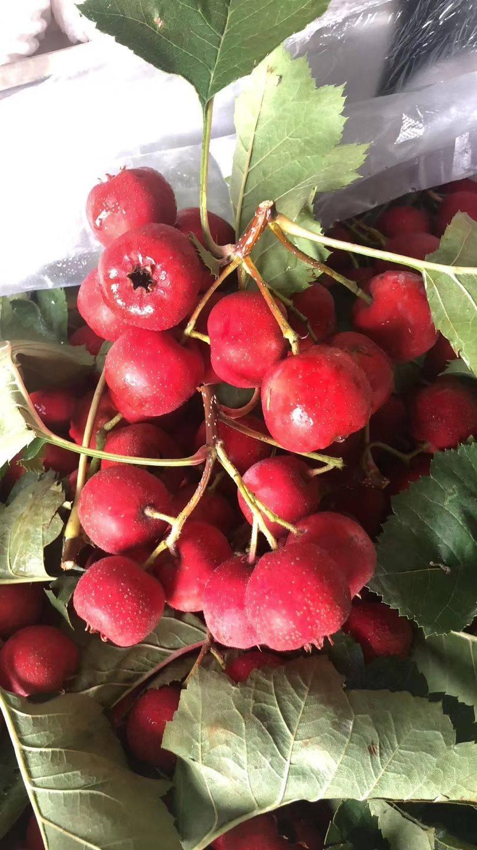 水果山楂,超市專賣,冰糖葫蘆專賣