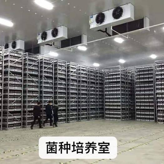 黔西安龙县 红托竹荪菌种
