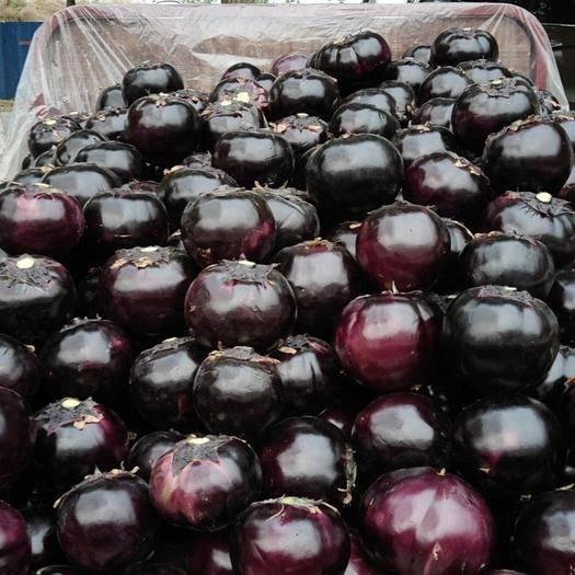 山东省聊城市东昌府区紫光圆茄 自己家种的,安全放心