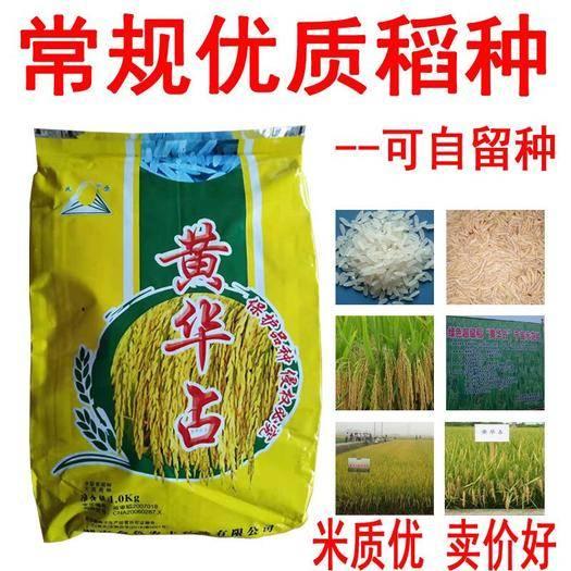南昌南昌县 黄华占,农香24香米,玉针香,香软品种,常规优质水稻种子