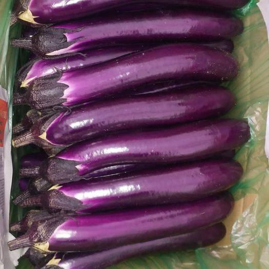 云南省西双版纳傣族自治州景洪市紫长茄 30~40cm 长茄