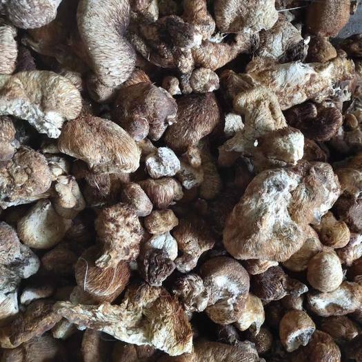 黑龙江省哈尔滨市尚志市 纯野生猴头菇,货好欢迎选购。