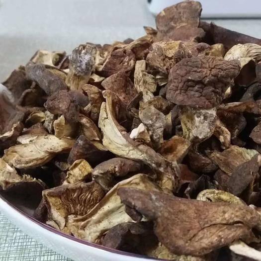 山西省吕梁市岚县 山西岚县特产纯野生山蘑菇纯天然野生蘑菇食用菌新货也蘑菇