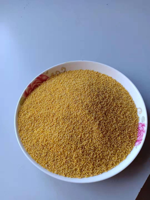 陜北小米,色澤金黃,顆粒渾圓,,粘糯芳香。老幼,孕婦最喜之