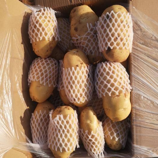 肥城市 荷蘭十五土豆庫存量大質優,規格齊全!品質一流!全國發貨!