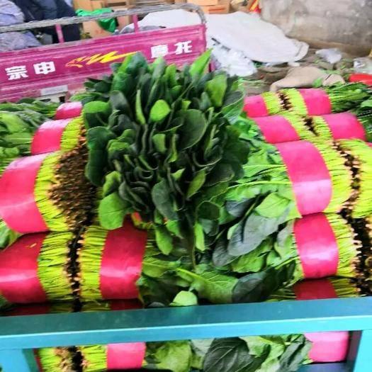 滨州惠民县 万亩基地菠菜,规格齐全,做工精细,保质保量,大量供货!