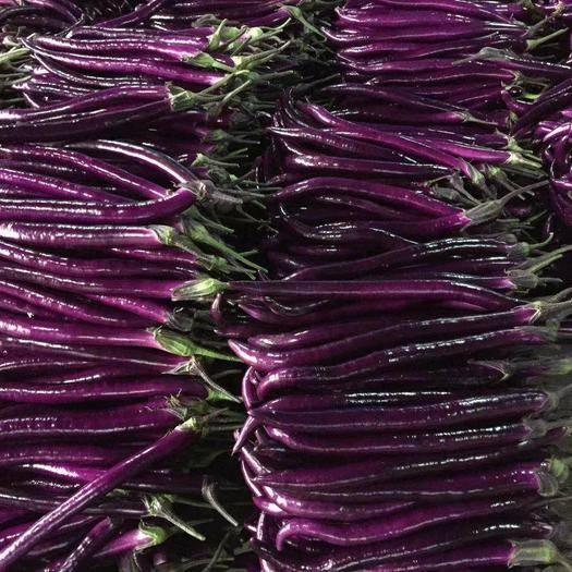 福建省厦门市同安区紫长茄 40cm以上 长茄