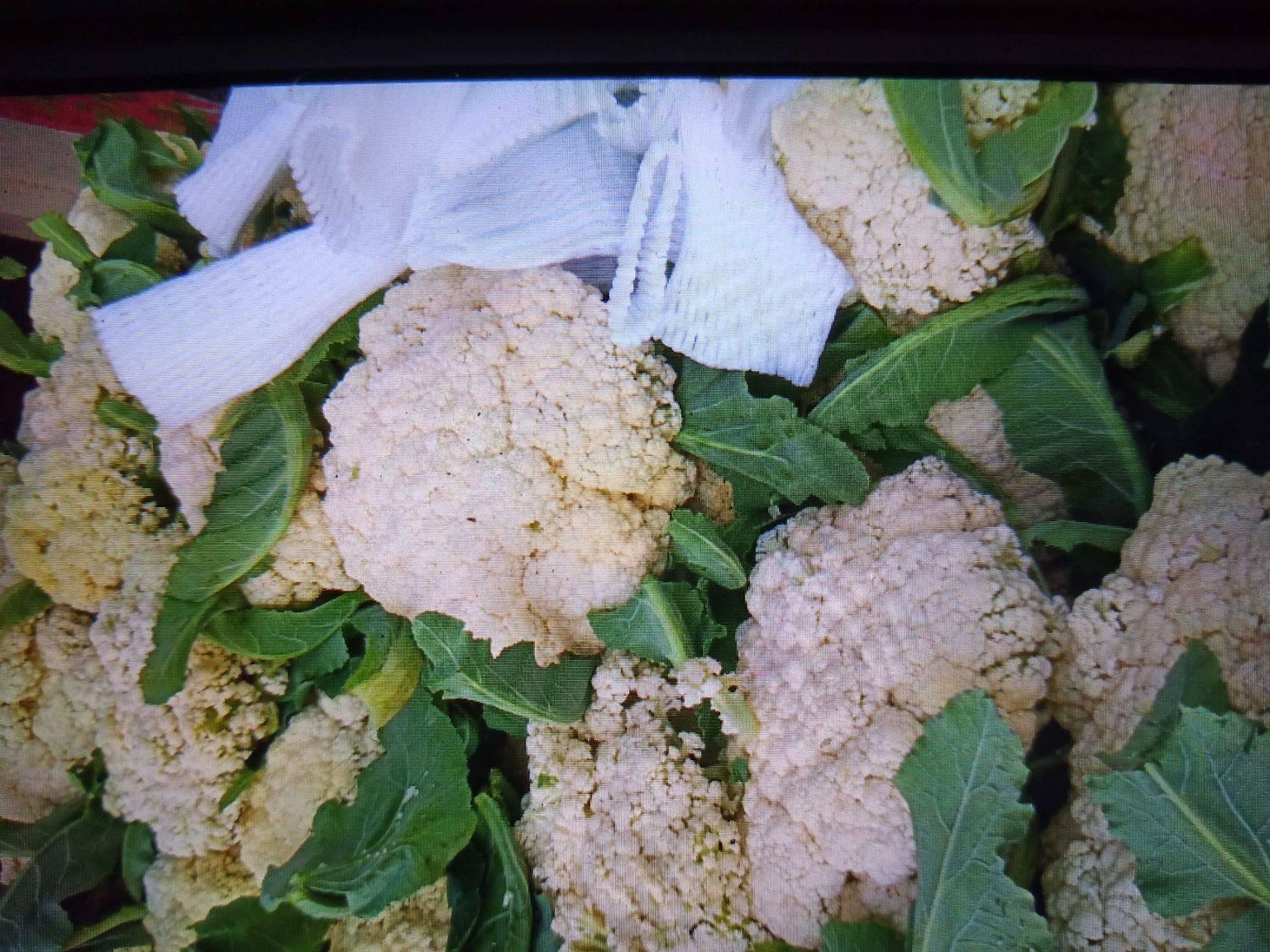 白面青梗松花菜 有機松花菜