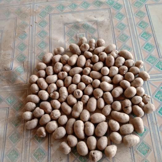 滨州惠民县白玉豆