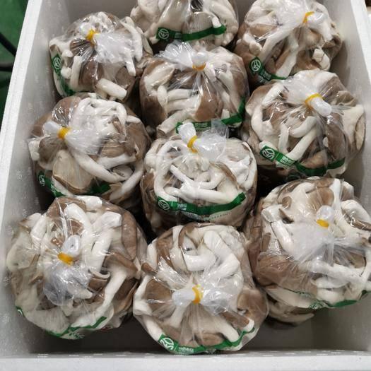 固安县 秀珍菇工厂化,周年出菇