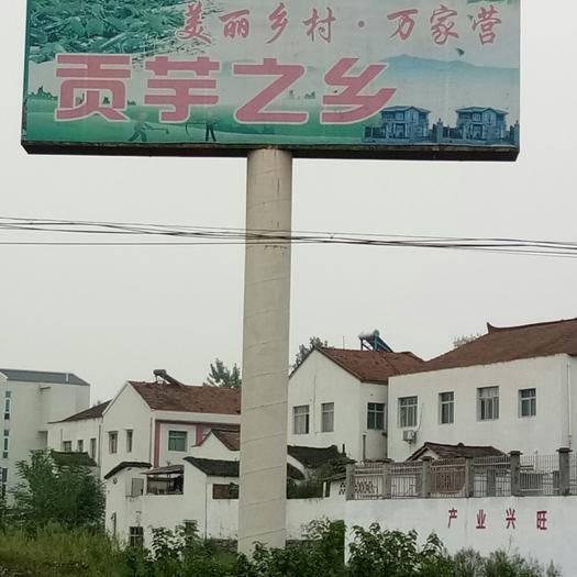 湖北省襄阳市谷城县 芋头,白芋,粉面润滑,口感细嫩。