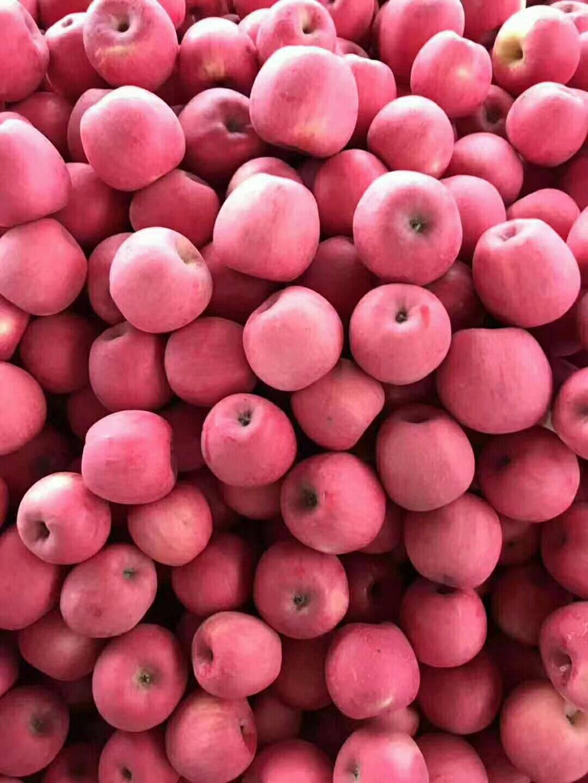 紅富士蘋果 75mm以上 條紅 紙袋