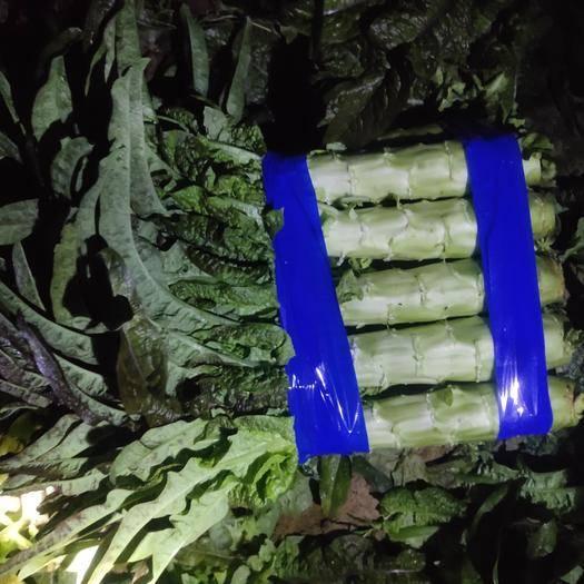 山东省临沂市沂南县 精品红尖叶莴笋,单颗1.5斤以上,基地直供
