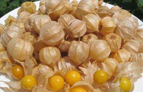 南充嘉陵区姑娘果种子 甜姑娘种子灯笼果种子包邮