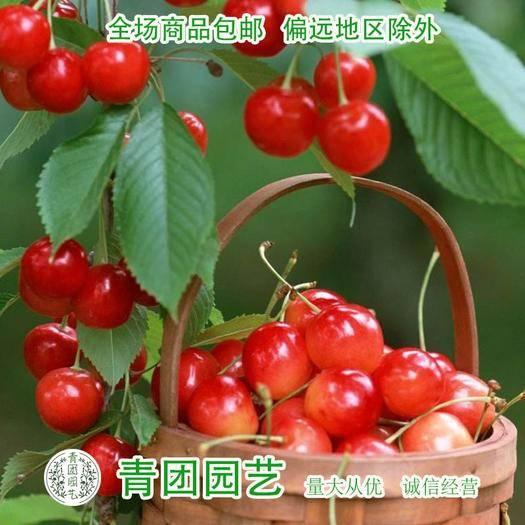 宿迁沭阳县 钙果种子欧李种子含钙王种子