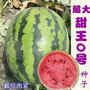 超大甜王0号西瓜种子 采用菲律宾原种基因高糖原装2000粒