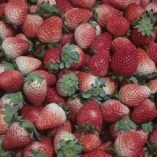 阜陽天仙醉草莓 加工果