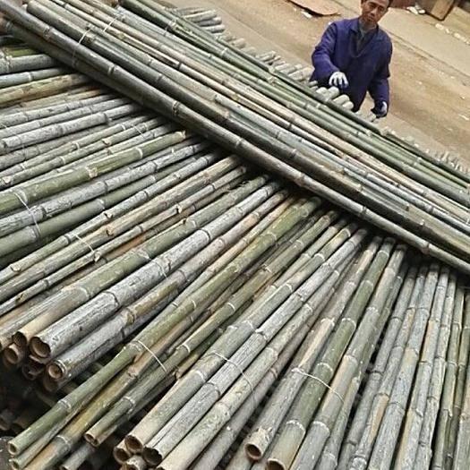 进贤县金竹 大量供应各种竹尾巴 各种规格都有