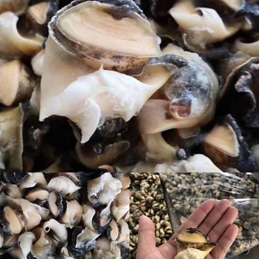 烟台芝罘区 原汁原味土耳其进口海螺头,品质保证