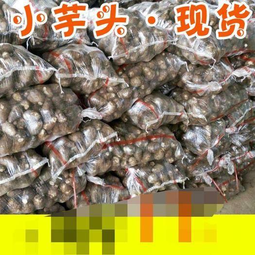 海南省海口市龙华区 小香芋芋头新鲜芋艿毛芋头5斤广西10香芋头毛芋红芽芋仔芋子
