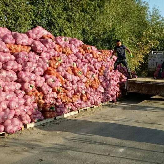 上海市浦东新区板栗南瓜 1~2斤
