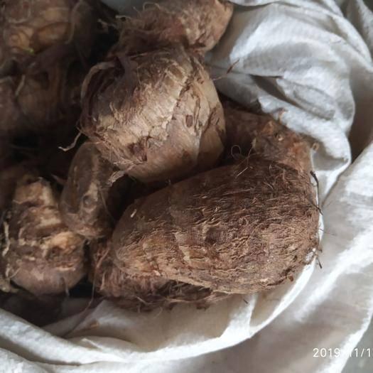 山东省青岛市平度市 大量批发毛芋头