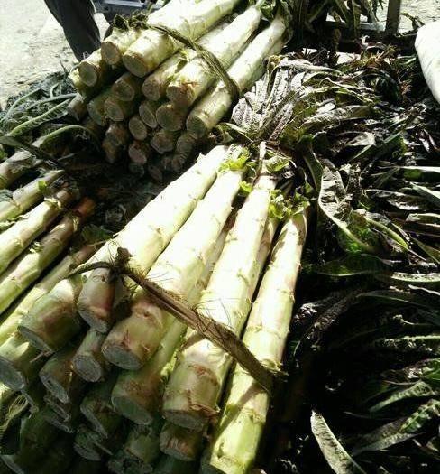 四川省凉山彝族自治州西昌市 削好皮的红叶香莴苣