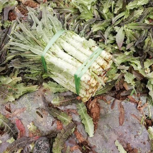 广西壮族自治区贺州市富川瑶族自治县 十几年的老产地,莴笋漂亮,欢迎各位老板来订购