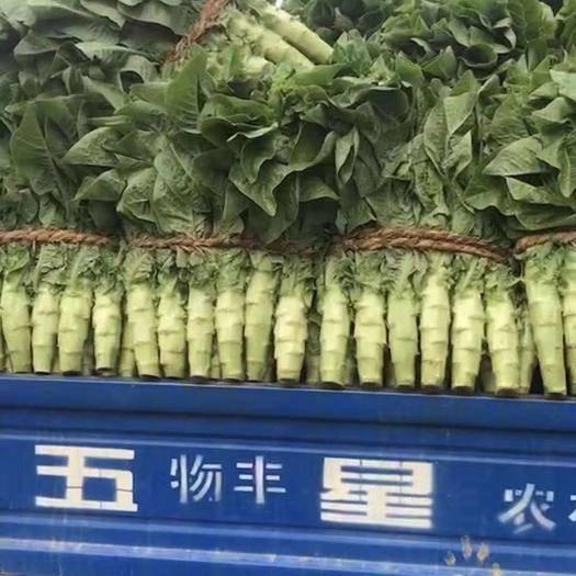 山东省临沂市兰陵县三青王莴笋 精品三青,绿皮绿瓤