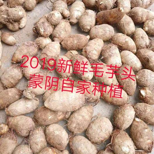 山东省临沂市蒙阴县 毛芋头2019新鲜蔬菜包邮蒙阴芋头
