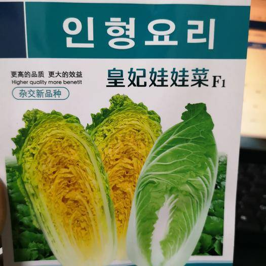 郑州二七区 皇妃娃娃菜种子 韩国进口 味鲜甜柔嫩 风味特好 结球紧