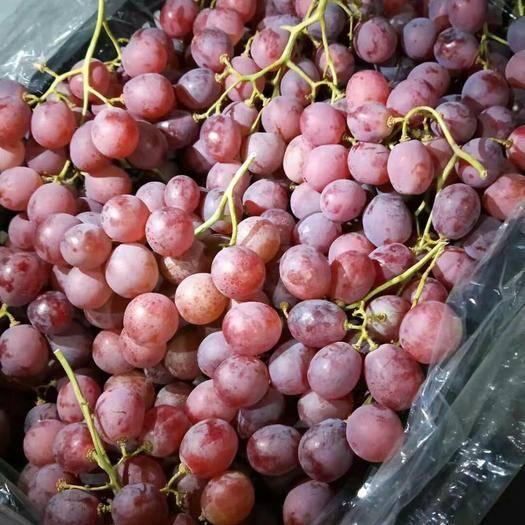 晋州市 红提葡萄/巨峰葡萄/克伦生葡萄大量供应/无坏果