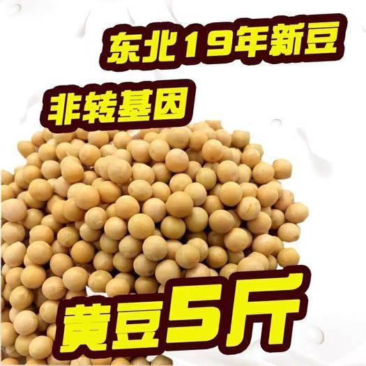 哈尔滨依兰县 2019东北新黄豆非转基因黄豆大豆打豆浆自产发豆芽笨黄豆五