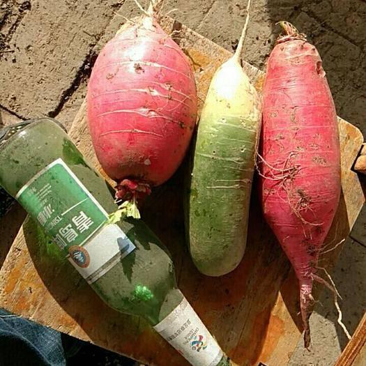 安徽省亳州市谯城区 萝卜,青红都有。价格随意,请帮忙销售。