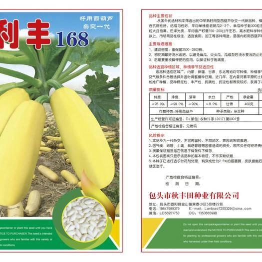 固阳县 利丰168 籽用西葫芦
